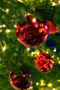 Weihnachtsmenüs Zum Franziskaner